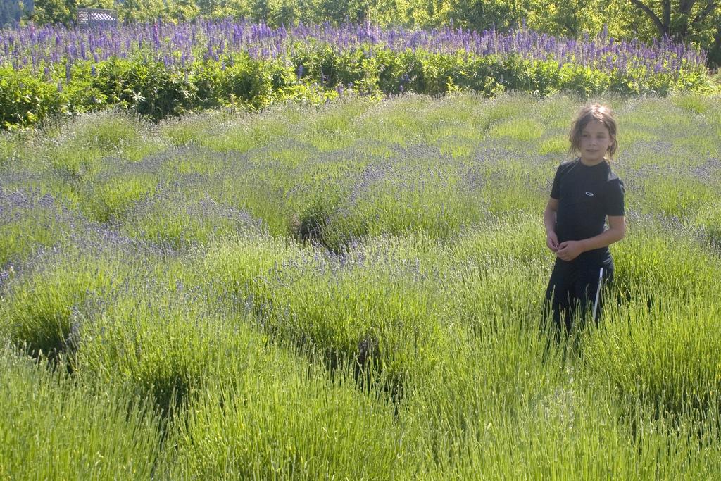 campo de flores con mujer a la derecha