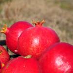 Grupo de frutos del granado
